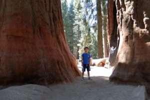 Parco delle sequoie California