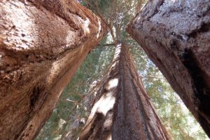 Sequoia & Kings Parco