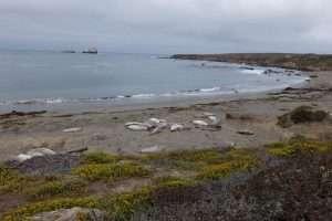Sea lions California highway 1