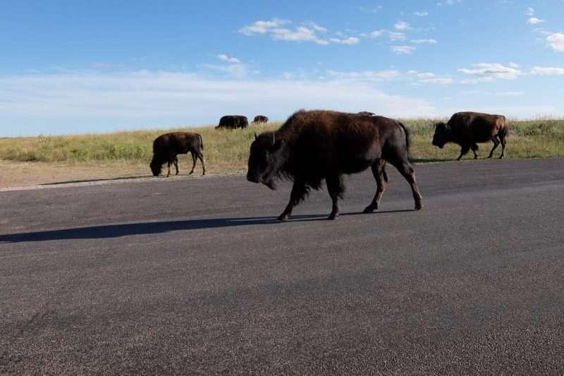 Custer State Park cosa vedere
