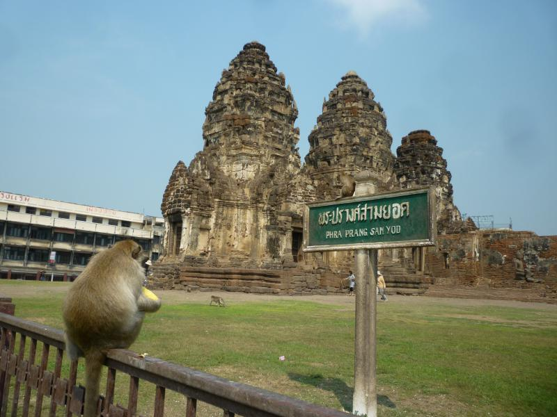 lopburi scimmia davanti al tempio