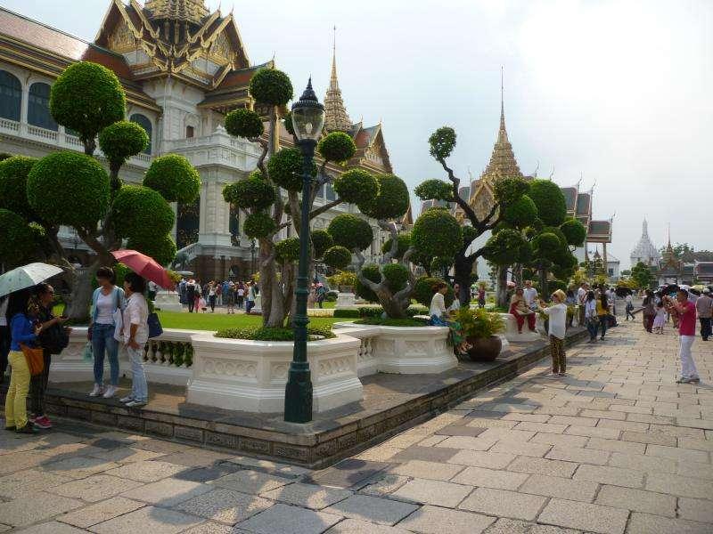 alberi potati al palazzo reale