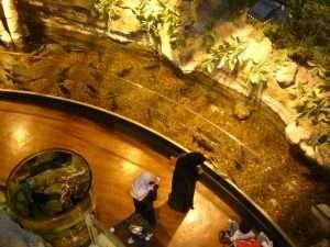 Passerelle dell'acquario del Dubai Mall
