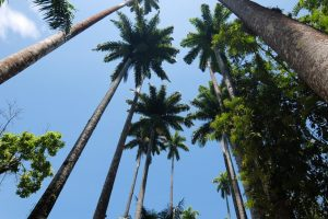 Palme nel giardino botanico