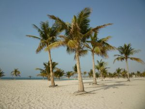 Palme in spiaggia a Sharjah