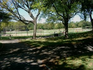 Campi di baseball Central Park