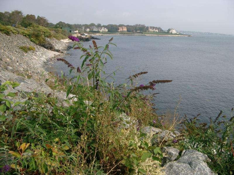 Cliff Walk a Newport