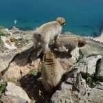 GIBILTERRA - La Rocca cosa vedere