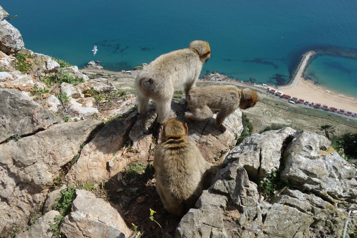 Gibilterra rocca bertucce