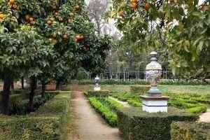 Siviglia Parque Maria Luisa aranci