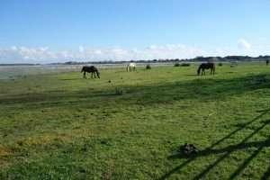 Parco de la Donana cavalli in libertà
