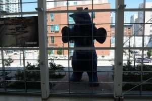 Convention Center Denver Blue Bear
