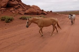 Cavalli selvaggi nella Monument Valley