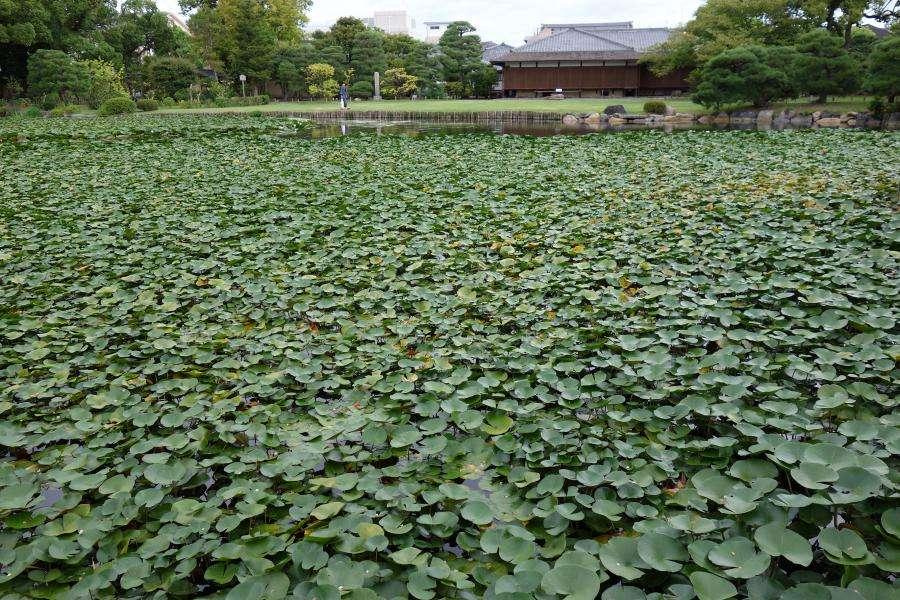 Kyoto Shosei-en giardino zen
