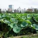 SHINOBAZU COSA VEDERE Ueno Park Tokyo