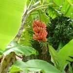 NATURA IN THAILANDIA GALLERY