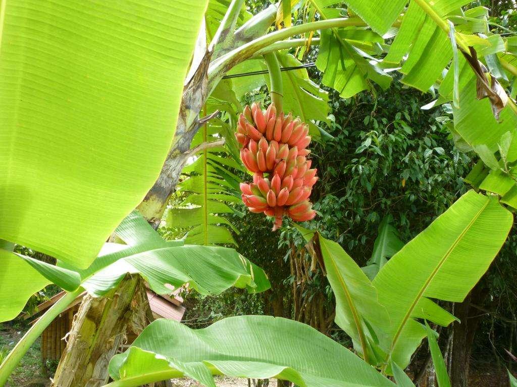Natura Thailandia gallery