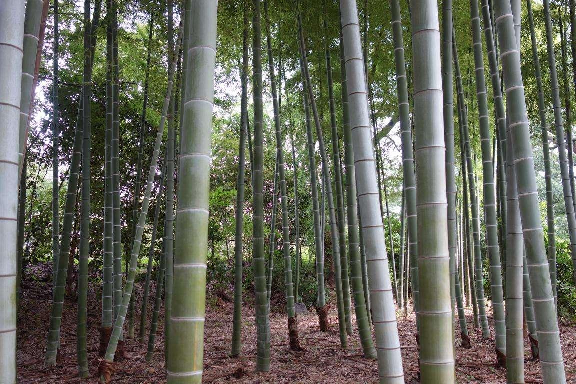 Giappone parchi e giardini