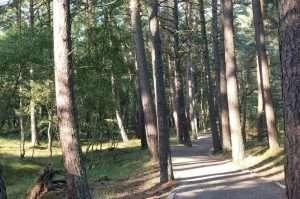 Bosco dello Slowinski park in Polonia